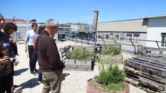 Visites du jardin de biodiversité sur le toit de l'Université de Lyon / IUT Lyon 3